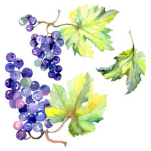 Grape Berry Healthy Food In A ...