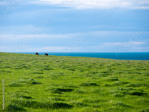 Photo Distance view of herd of cattle pasture on green meadow against cloudy sky and blue ocean