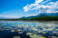 Montenegro, Green Lily Pads Of Water Lily Plants Covering Water Surface Of Skadar Lake Near Reed Surrounded By Mountains Under Blue Sky