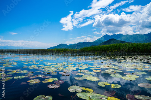 Recess Fitting Water lilies Montenegro, Green lily pads of water lily plants covering water surface of skadar lake near reed surrounded by mountains under blue sky