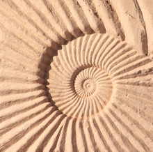Detail Of Carved Stone Ornament With Ammonite Shell
