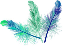 Three Blue And Green Feathers Isolated On White