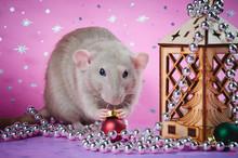 Funny Rat With Plywood Flashli...