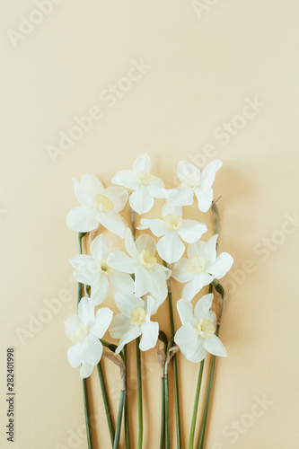 Narcissus flower on pastel background. Flat lay, top view minimal summer floral pattern composition.