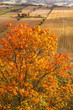 canvas print picture - Autumn colors at the tree and a rural landscape view