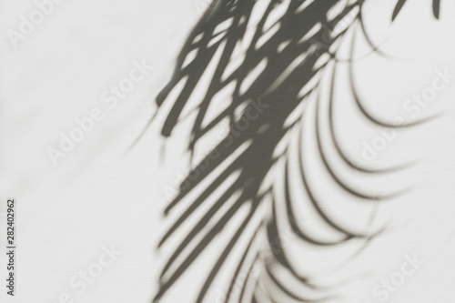 Neutral floral composition with tropical palm branch silhouette. Flat lay, top view florist minimal exotic nature background.