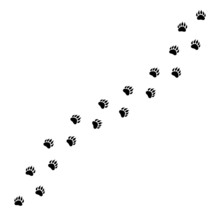 Vector Flat Black Path Of Bear...