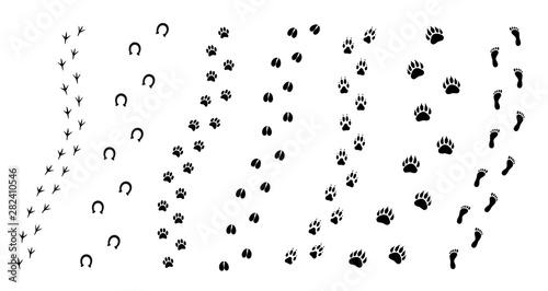 Vector flat black set collection of animals foot print path isolated on white ba Canvas Print