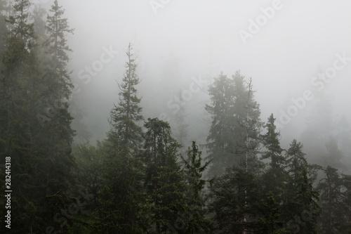 Montage in der Fensternische Schwarz Berg und Wald in Nebel