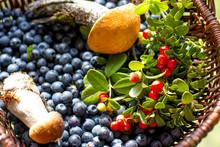 Berry Mushroom Basket. Blueber...