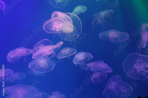 Jellyfish in the sea illuminated by beautiful lights Canvas Print