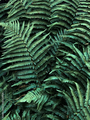 green leaf of fern - 282428906