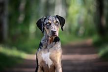 Beautiful Dog With Blue Eyes P...