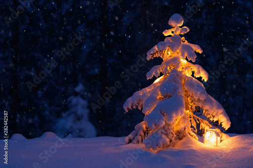 Fotomural  Christmas tree with a lantern in the snow in the woods