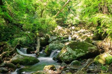 筑後川源流 Chikugo River source 熊本県小国町