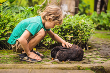 The Boy Feeds The Rabbit. Cosm...