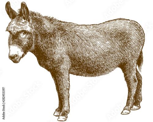 Tableau sur Toile engraving illustration of burro donkey