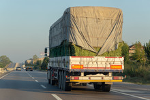 Rear View Of Two Logistics Trucks Going On Highway Traffic With A Load Of Green Straw Bales Closed With A Tent.