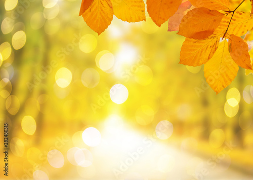 Foto op Canvas Geel Vibrant fall foliage