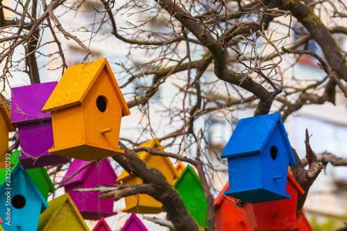 Photo  Colorful group of birdhouses on a dry tree