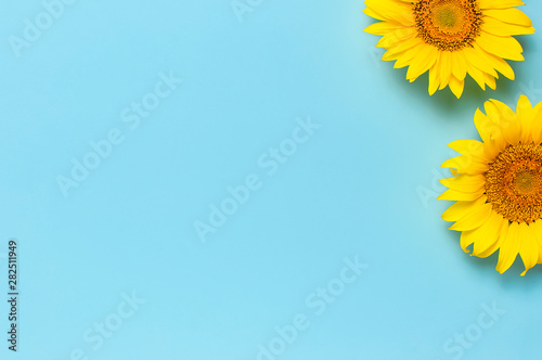 Beautiful fresh sunflowers on blue background. Flat lay, top view, copy space. Autumn or summer Concept, harvest time, agriculture. Sunflower natural background. Flower card