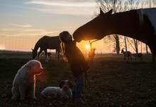 Silhouette Girl And Horse Kissing On Farm At Sunset