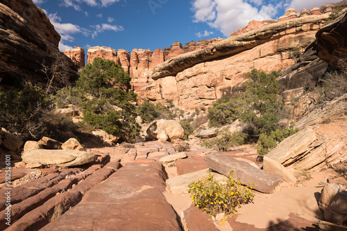 Juniper trees and a rock wall, within a canyon wash. Located in the Needles District of Canyon Lands National Park, Utah.