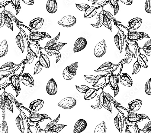 Fotografija Vector illustration of sketch hand drawn pattern with black and white branches almond nuts, tree