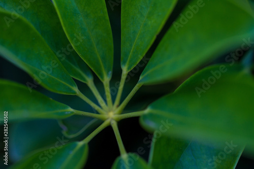 Tropical leaves, abstract green leaves texture, nature background.