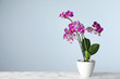 Beautiful tropical orchid flower in pot on marble table against light blue background. Space for text