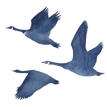 Watercolor Silhouettes Of Flying Geese On A White Background