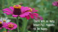 Inspirational Words - There Is So Many Reasons To Be Happy. With Beatiful Red Zinnia Flowers In The Garden Background.