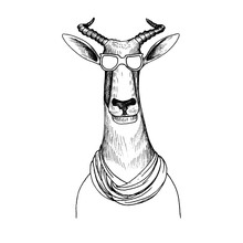 Vector Hand Drawn Head Of Antelope