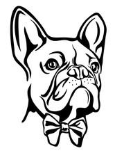 French Bulldog Head Vector