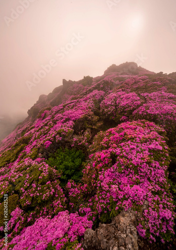 Foto auf AluDibond alpine flowers on the mountain in end of day
