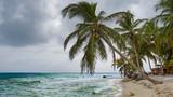 Fototapeta Krajobraz - palm tree on the beach