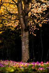Fototapeta Drzewa flowers in the park