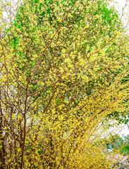 Panel Szklany Inspiracje na wiosnę tree in spring