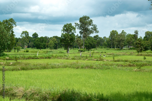 obraz PCV Reisfelder und Landwirtschaft in Südostasien