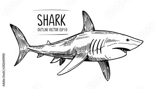 Fototapeta  Sketch of shark