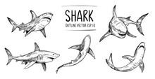 Set Of  Shark Sketches. Hand D...