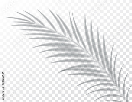 Shadows, overlay effects mock up, leaf of palm tree plant, natural interior light, vector illustration.