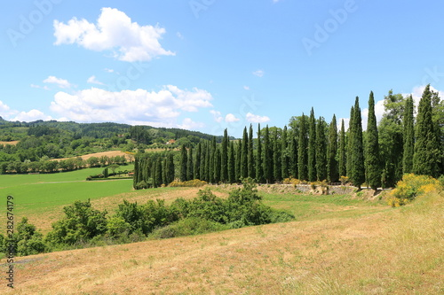 Wall Murals Melon Famous Tuscany landscape with cypress trees view from Castle of Romena, Italy.