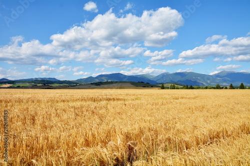 Fototapeta widok na pola i góry obraz