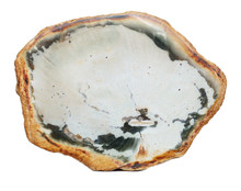 Polished Slice Of Petrified Wood From The Araucaria Family Of Plants, Isolated On A White Background.