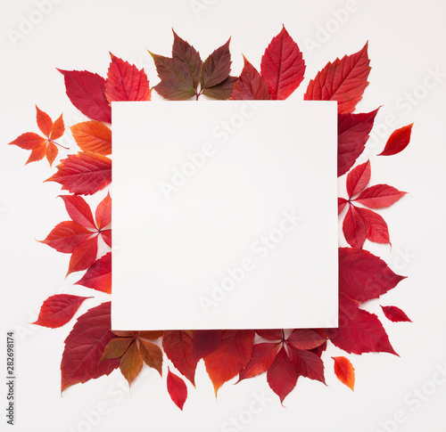 Wallpaper Mural Red autumn fallen leaves with square blank space inside