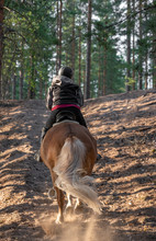 Woman Horseback Riding In Forest And Meadow