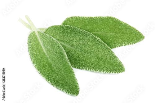 Fototapeta heap of fresh green sage isolated on white background obraz