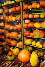 Yellow Pumpkins On Shelf