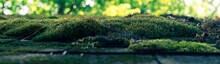 Panoramic Shot Of Green Moss On Rocks In A Forest